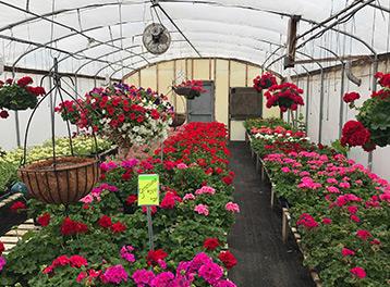 Door County Greenhouse Sturgeon Bay Fresh Flowers Bailey S